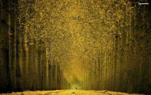 Beautiful Tall Trees 495x312 - Olfactory psychology - The Language of Scents
