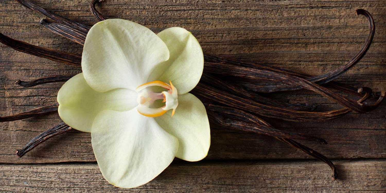 Vanilla-Rosewood