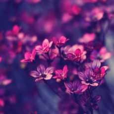 Flowers Perfumes