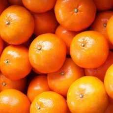 tangerine 1 230x230 - Tangerine